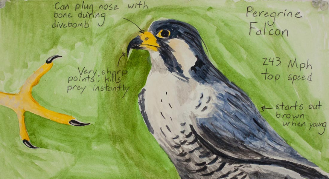 Drawing for Understanding in Field Science